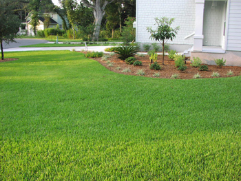St Augustine Gres Are The Most Shade Tolerant Of All Warm Season Lawn